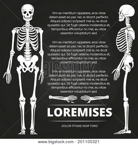 Chalkboard poster with human skeletones and bones. Skeleton human illustration vector