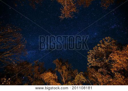 Dark blue night starry sky above the mystery autumn forest with orange and yellow trees. Long exposure photo of milky way stars in the woods.