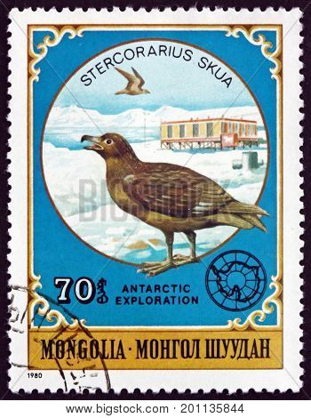 MONGOLIA - CIRCA 1980: a stamp printed in Mongolia shows Great Skua Stercorarius Skua is a Large Seabird circa 1980