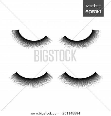 Lashes isolated on white background. False eyelashes set. Vector illustration