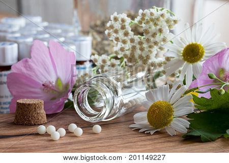 A Bottle Of Homeopathic Globules With Herbs And Flowers