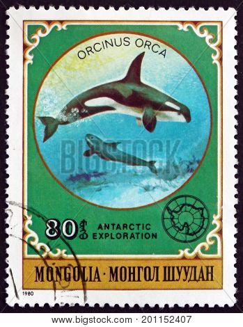 MONGOLIA - CIRCA 1980: a stamp printed in Mongolia shows Killer Whale Orcinus Orca is a Toothed Whale circa 1980