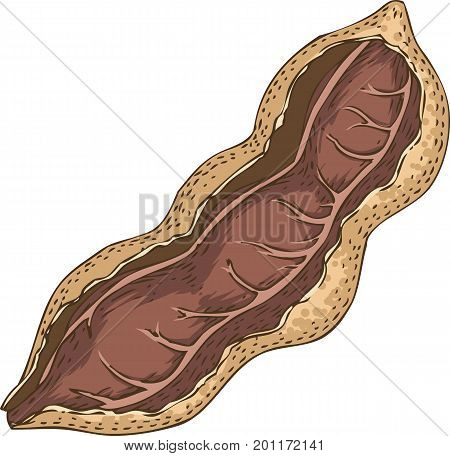 Ripe Tamarind in Cross Section Isolated on a White Background