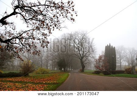 Creepy, foggy driveway located on countryside. Foggy autumn months.