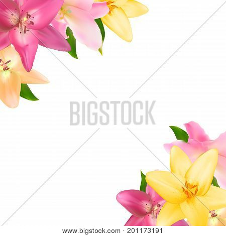 Vector Illustration with Lily Flowers Isolated on White  Background EPS10