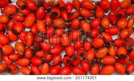 Rosa canina rosehip fruits texture nature background