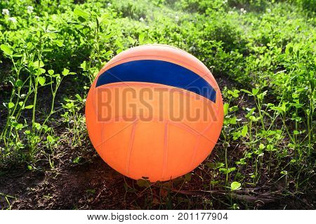 Bright orange beach ball lying on the lawn on the grass. On the ball blue stripe. Grass green with white flowers. Evening locking out the sunlight.