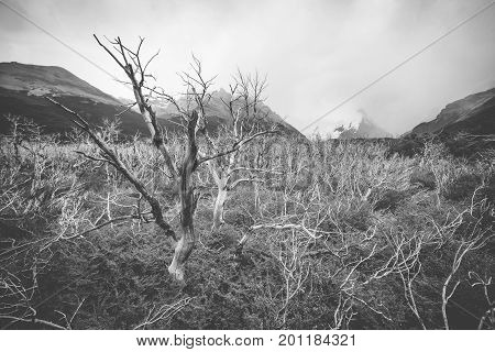 Black-and-white picture of tree branches against the background of mountains. Mountains and forests in the background. The fog envelops the distant mountains.