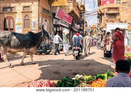 JAISALMER RAJASTHAN INDIA - MARCH 07 2016: Horizontal picture of cows motorcycles and indian people at the street market in Jaisalmer known as Golden City in India.