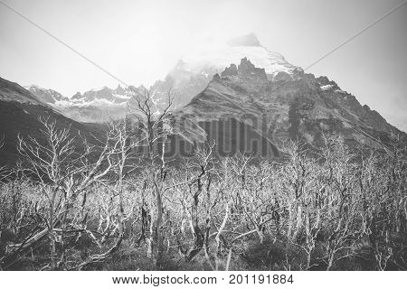 Black and white photograph of the valley and rocks. Rocky mountains with forests rise above the valley. Mountains and forests in the background. The fog envelops the distant mountains. White branches of trees with bushes.