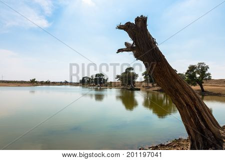 Horizontal picture of local cut tree with clean water in a oasis in Thar Desert located close to Jaisalmer the Golden City in India.