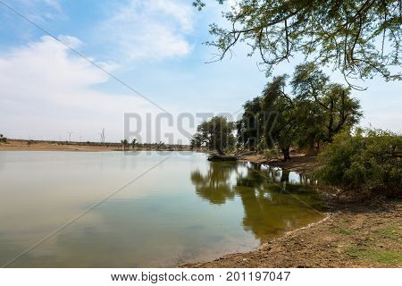 Wide angle picture of local vegetation with clean water in a oasis in Thar Desert located close to Jaisalmer the Golden City in India.