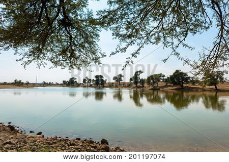 Horizontal picture of local vegetation with clean water in a oasis in Thar Desert located close to Jaisalmer the Golden City in India.