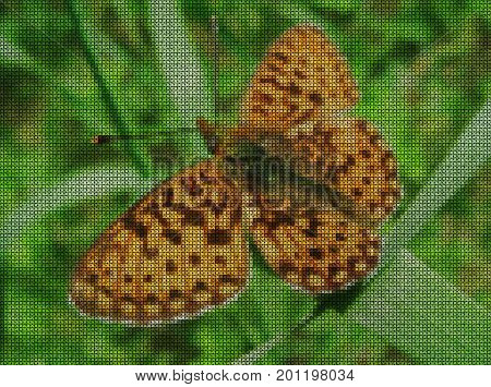 Illustrations. Cross-stitch. Large butterfly on a blade of grass in a field.