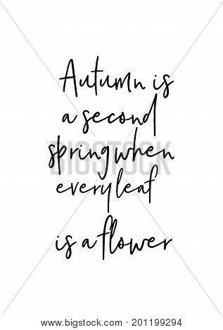 Hand drawn holiday lettering. Ink illustration. Modern brush calligraphy. Isolated on white background. Autumn is a second spring when every leaf is a flower.