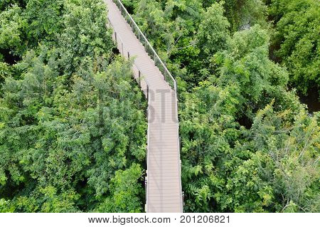 wooden walkway for looking view over forest