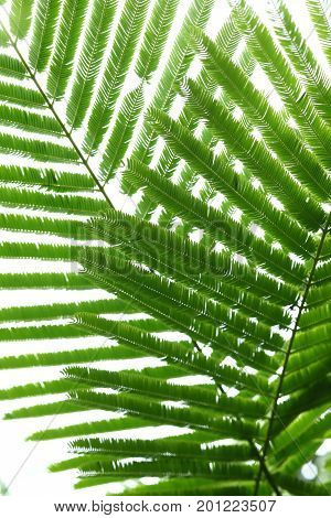 Abstract Green Leaves In Nature Background