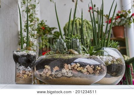 Mini gardens created with succulents plants, crystal ports, stones and sand