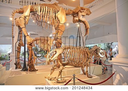 Bucharest Romania July 29th: Inside the National Museum of Natural History Bucharest. Shot talek on July 29th 2014