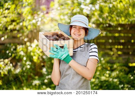 Photo of brunette woman with potato box in summer garden