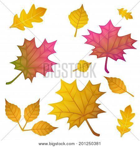 autumn leaves set, isolated on white background. vector illustration flat style.
