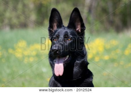 Portrait Of The Black Dog
