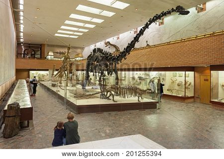MOSCOW RUSSIA - AUGUST 20 2017: Skeletons of dinosaurs at Paleontological Museum. Large dark skeleton is skeleton of diplodocus.