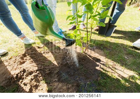 volunteering, charity, people and ecology concept - group of happy volunteers planting and watering tree seedling in park