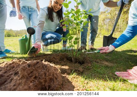volunteering, charity, people and ecology concept - group of volunteers hands planting tree seedling in park
