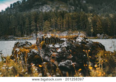 True tilt-shift scenery of mountain stone in foreground overgrown with native grasses and moss pine forest in background on Katun river bank on hill rank Russia Altai mountains