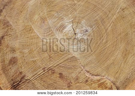 texture of wood of a felling background
