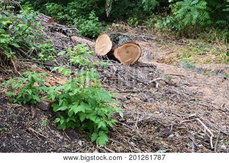 Stack of spilled logs in the forest side view.