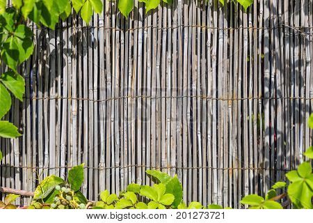 Bamboo material wall framed with green leafs.