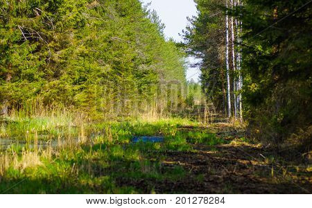 Wetland ecosystem restoration and conservation area in Soomaa, Estonia