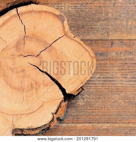 Tree trunk piece on a wooden background with copy space for text. Natural wood texture background. Tree cross section closeup. Top view