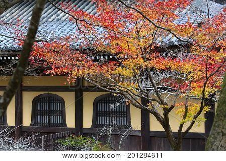 Kyoto Autumn