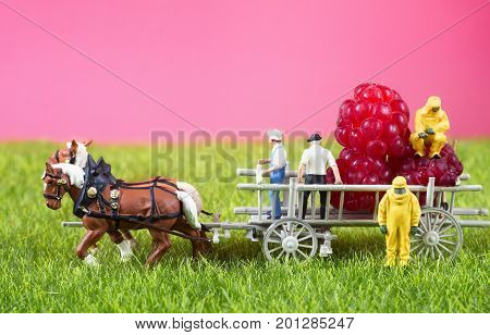 Two toy people in hazmat suits are checking raspberries in a cart of farmers searching for GMO, chemical or radioactive pollution.