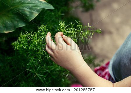 Closeup macro shot image of child hand fingers touching green plant. Kid baby discovering world around. Early development education. Toned with filters. Lifestyle healthy happy childhood concept.