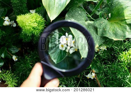 Hand palm holding magnifying glass in botanical garden. Green plant leaves and small white flower view through loupe. Nature study learning concept.