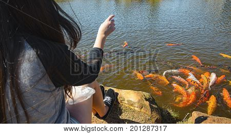 Group of colorful carps swimming on waters of a lake being fed by a girl on the ravine. Focus on the fishes. Ornamental fish.