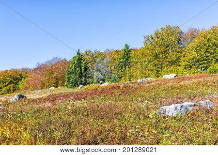 Rocky Landscape Meadow Hill In Dolly Sods, West Virginia In Autumn