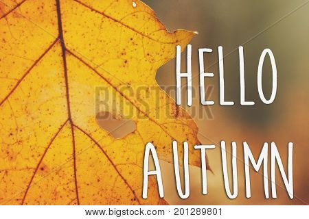 Hello Autumn Fall Text Sign On Beautiful Yellow Autumn Leaf With Heart Shaped Tear On The Background
