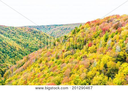 Allegheny Mountains In West Virginia Autumn With Red And Golden Trees