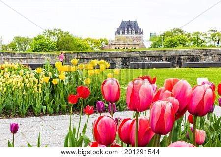 Quebec City, Canada - May 29, 2017: Green Grass Fields With Colorful Tulip Flowers In Park With Fort