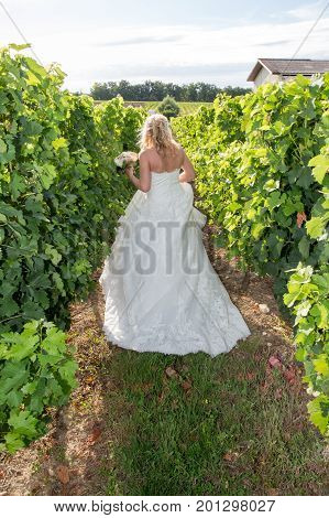 Bride Holds Bouquet In Hand, Back View In Wineyards Bordeaux In France