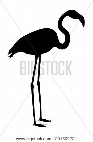 Vector illustration of greater flamingo silhouettes  on white background