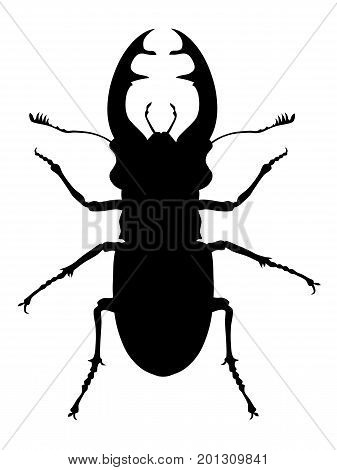 Vector illustration of stag beetle silhouette on white background