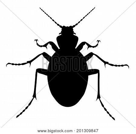 Vector illustration of carabus coriaceus beetle silhouette