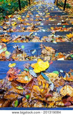Autumn leaves on wooden stairs