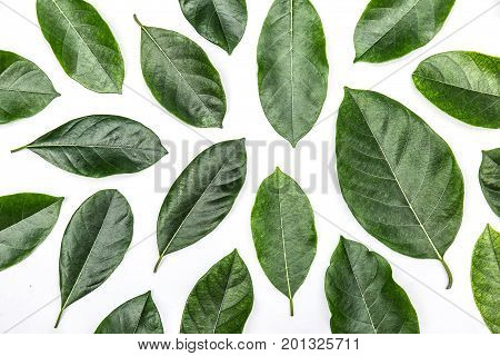 One green leaf of jackfruit tree isolated on white background. Tropical plant green leaf spring time banner environment concept. Close-up studio photography.